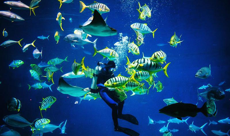 奇趣海洋世界