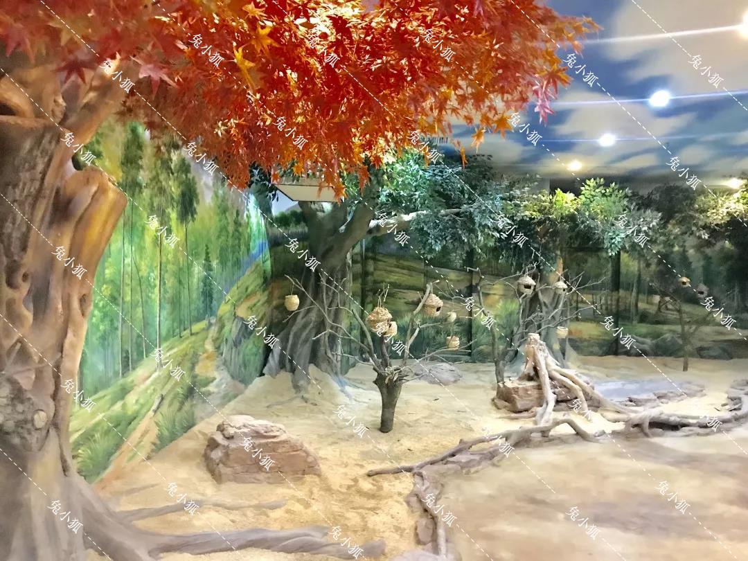 兔小狐室内动物园