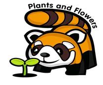 小浣熊的花花草草